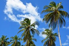 Palm trees towards the sky Stock Images