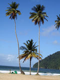 Palm Trees in Trinidad Royalty Free Stock Photo