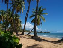 Palm trees on a tropic beach Stock Photography