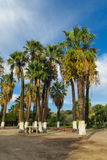 Palm trees in tropic city park Stock Images