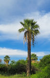 Palm trees in tropic city park Stock Photos