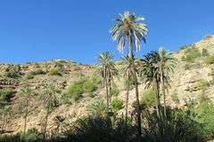 Palm trees in tropic mountains Royalty Free Stock Photography