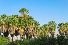 Palm trees in tropic Royalty Free Stock Images