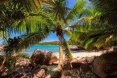 Palm trees on tropical Anse Lazio beach, Seychelles. Fine Anse Lazio tropical beach at Praslin island, Seychelles Stock Photo