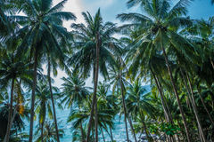 Palm trees tropical background Stock Image