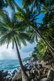 Palm trees tropical background Stock Photography