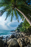 Palm trees tropical background Stock Photo