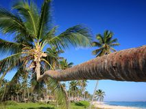 Palm trees and tropical beach Royalty Free Stock Photo