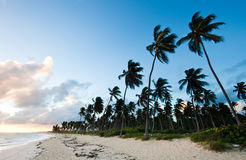Palm Trees on Tropical Beach Royalty Free Stock Photos