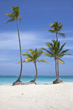 Palm trees on tropical beach Stock Photos