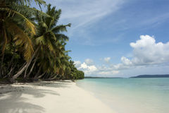 Palm trees on tropical beach Stock Photography