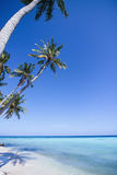 Palm trees on tropical beach Royalty Free Stock Images