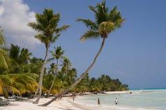 Palm trees on a tropical beach. (Saona Island, Domenican Republic stock photography