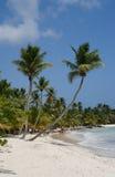 Palm trees on a tropical beach. (Saona Island, Domenican Republic stock photo