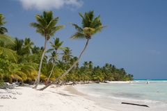 Palm trees on a tropical beach. (Saona Island, Domenican Republic royalty free stock images