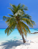 Palm trees on tropical beach Royalty Free Stock Photo