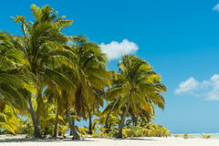 Palm-trees on tropical Beach Royalty Free Stock Photo