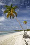 Palm trees on tropical beach. Beautiful tropical beach seascape with palm trees Royalty Free Stock Photos