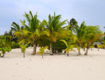 Palm trees on tropical beach Stock Images