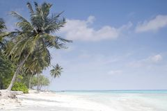 Palm trees on tropical beach. Palm trees on tropical island beach in the Maldives with the turquoise clear water of the Indian ocean and white fluffy clouds Royalty Free Stock Images