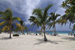 Palm trees on tropical beach Stock Image