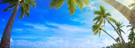 Palm trees on tropical beach. Royalty Free Stock Photos