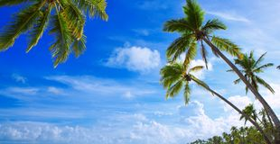 Palm trees on tropical beach. Stock Image