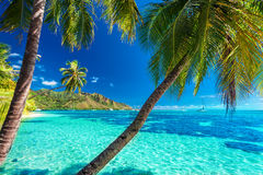 Palm trees on a tropical beach with a blue sea on Moorea, Tahiti. Island Royalty Free Stock Image