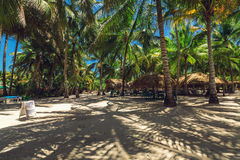 Palm trees on the tropical beach. Caribbean island. Royalty Free Stock Photo