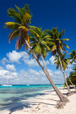 Palm trees on the tropical beach, Caribbean Sea Stock Photos