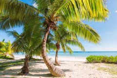 Palm trees on tropical beach Royalty Free Stock Photography