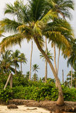 Palm trees on tropical beach in the Colombia,America Sur Stock Images
