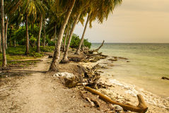 Palm trees on tropical beach in the colombia,America Sur Royalty Free Stock Photography