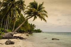 Palm trees on tropical beach in the colombia,America Sur Royalty Free Stock Image