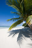 Palm trees on a tropical beach Stock Image