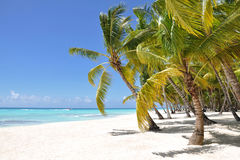 Palm trees and tropical beach. On a desert island Royalty Free Stock Photos