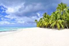 Palm trees and tropical beach. On a desert island Stock Photography