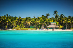 Palm trees on the tropical beach Stock Images
