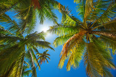 Palm trees on the tropical beach Royalty Free Stock Images