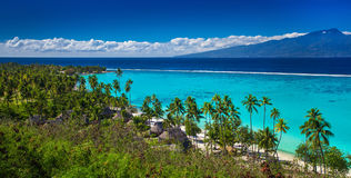 Palm trees on tropical beach of Moorea island with the view of T Royalty Free Stock Photos