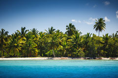 Palm trees on the tropical beach, Saona Island, Dominican Republ Royalty Free Stock Image