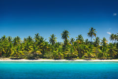Palm trees on the tropical beach, Saona Island, Dominican Republ Stock Photography