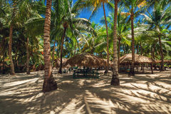 Palm trees on the tropical beach. Saona island. Royalty Free Stock Photo