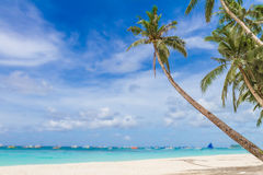 Palm trees on tropical beach and sea background Royalty Free Stock Photos