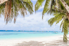 Palm trees on tropical beach and sea background Stock Images
