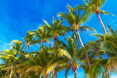Palm trees on a tropical beach, the sky in the background. Summe Stock Image