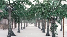 Palm trees on tropical beach and snowing, winter holiday.  stock footage