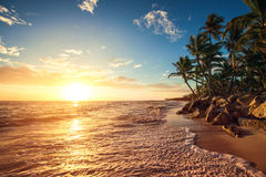 Palm trees on the tropical beach. Sunrise shot Royalty Free Stock Images