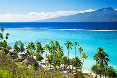 Palm trees on tropical beach in tahiti Stock Photos