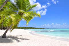 Palm trees and tropical beach Stock Photo